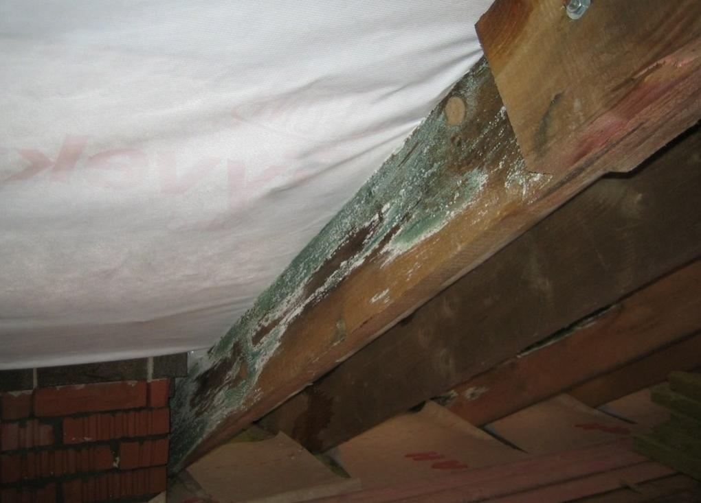 Сырость в деревянном доме: как избавиться